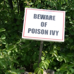 New IE zero day exploit circulating, used to install Poison Ivy