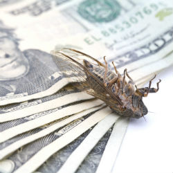 Twitter adds unlimited payouts to its bug-bounty program