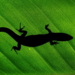 Lizard. Image courtesy of Shutterstock.