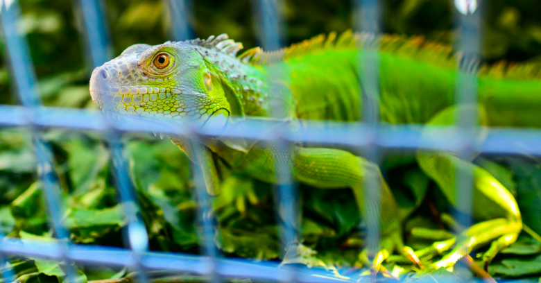 National Crime Agency snares teens who used Lizard Squad DDoS tool